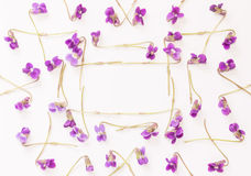 A frame of small forest flowers purple violets on white background with space for text. Stock Photo