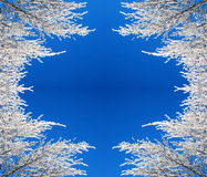 Frame of snow branches Royalty Free Stock Photo