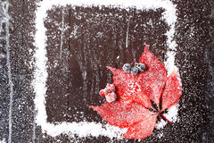Frame of the snow with a red leaf Stock Images