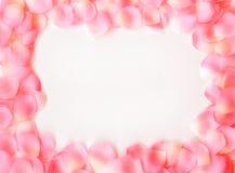 Frame sonhador da pétala de Rosa Fotos de Stock Royalty Free