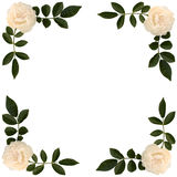 Frame of sprigs  tea-rose Stock Images