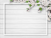 Frame with spring blossoming cherry branches. Frame with spring blossoming cherry branches on a white wooden background. Blank for advertising flyer or royalty free illustration