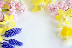 Frame of spring flower Stock Photos