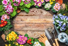 Frame of spring flower and gardening tools Stock Image
