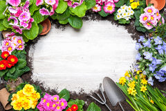 Frame of spring flower and gardening tools. On old wooden background Royalty Free Stock Image