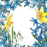 Frame with spring flowers daffodils and and small blue flowers. Decorative season floral frame for festive design Royalty Free Stock Image