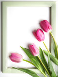 Frame with spring tulips Royalty Free Stock Images