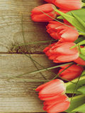Frame of Spring Tulips Stock Image