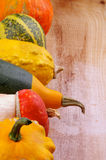 Frame of Squash. Frame of Various Miniature Pumpkin, Squash and Marrow closeup on Wooden background Stock Image