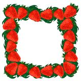 Frame strawberries. Royalty Free Stock Photography