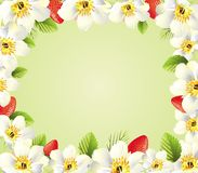 Frame from Strawberries and flowers Stock Image