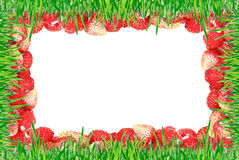 Frame of strawberries and grass on a white background. Stock Image