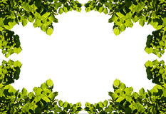 Frame of summer leaves Royalty Free Stock Photo