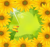 frame of sunflower with a butterfly Stock Photo