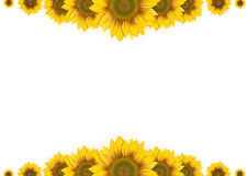 Frame of sunflowers Stock Image