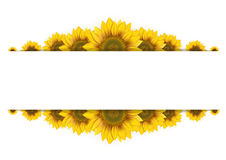 Frame of sunflowers on a white background Stock Photo