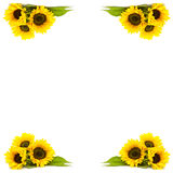 Frame of sunflowers Stock Photos