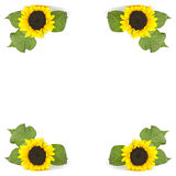 Frame of sunflowers Royalty Free Stock Photo