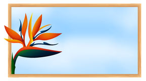 Frame template with bird of paradise flower Stock Photography