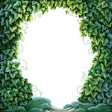 Frame for text decoration Enchanted Forest from green ivy and moss Royalty Free Stock Photo