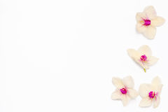 Frame for text of the flowers of orchids on the side. Stock Photography