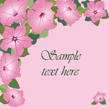 Frame for text with pink flowers Royalty Free Stock Photography