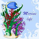 Frame for text sea theme , fish and algae from corals. On a blue background drawing of beautiful green algae fish surgeon and red corals , around the transparent Royalty Free Stock Photo
