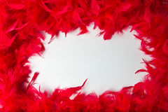 Frame with the texture and bright red feathers Stock Photography