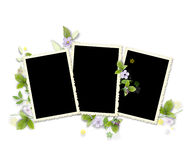 Frame for three photos with artificial flowers Royalty Free Stock Photography