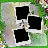 Frame for three photos with colorful flowers Stock Photography