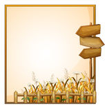 A frame with three wooden arrows Stock Images