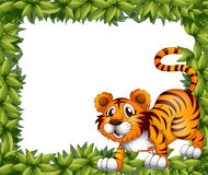 A frame with a tiger Stock Image