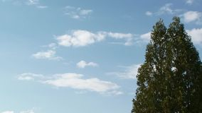 In the frame tree against the blue sky and clouds stock video footage
