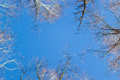 Frame of tree branches against the blue sky Royalty Free Stock Images