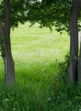 Frame of trees  around a green meadow, copy space in the backgro Royalty Free Stock Photography