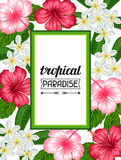 Frame with tropical flowers hibiscus and plumeria. Image for holiday invitations, greeting cards, posters Royalty Free Stock Image