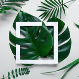 Frame of tropical leaves Monstera and palm on white background a space for text. Top view, flat lay. Frame of tropical leaves Monstera and palm on pink stock photography