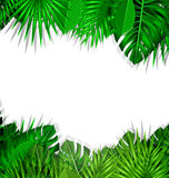 Frame Tropical Leaves Summer Background Stock Photography
