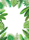 Frame from tropical leaves Royalty Free Stock Photo