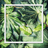 Frame of tropical nature and palm leaves Stock Photos