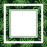 Frame tropical palm leaf and monstera Stock Photos