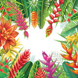 Frame from tropical plants Stock Photography