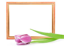 Frame with tulip isolated on white Stock Images