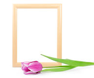 Frame with tulip isolated on white Stock Photography