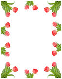 Frame of tulips. Frame of illustrated tulips over white background vector illustration