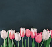 Frame of tulips on black stone background with copy space for me royalty free stock image