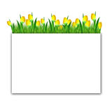 Frame: tulips in the grass Stock Photography