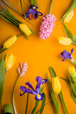 Frame of tulips, irises on a yellow background. Vertical Stock Photo