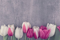 Frame of tulips onstone background with copy space for message. Spring flowers. Greeting card for Valentine`s Day, Woman`s Day and Mother`s Day. Top view royalty free stock photography