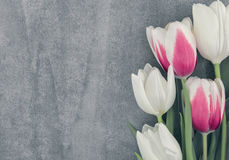 Frame of tulips onstone background with copy space for message. Spring flowers. Greeting card for Valentine`s Day, Woman`s Day and Mother`s Day. Top view stock image
